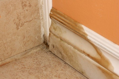 Professional Mold Removal in The Villages, FL