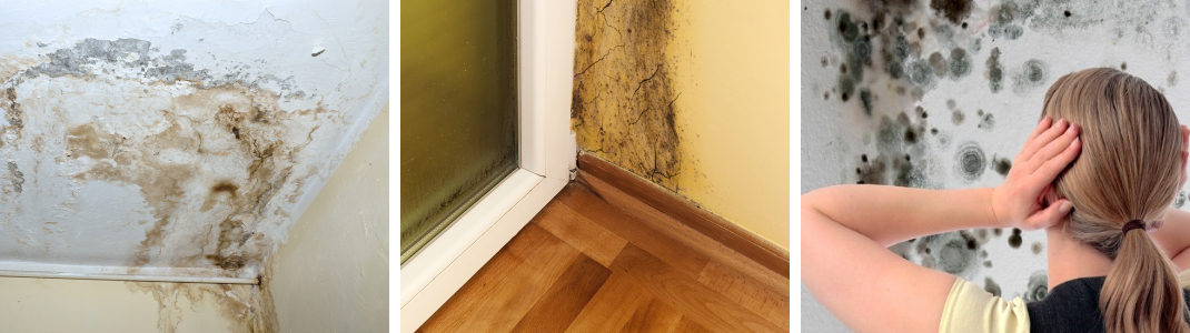 Mold Remediation Services in the Villages