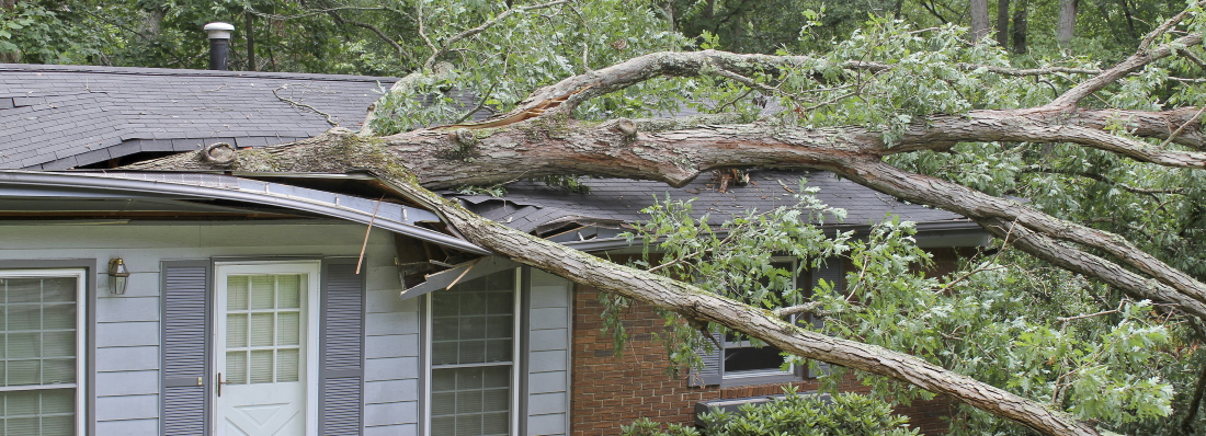 What Do You Do If A Tree Damages Your Roof Onerestore Ocala