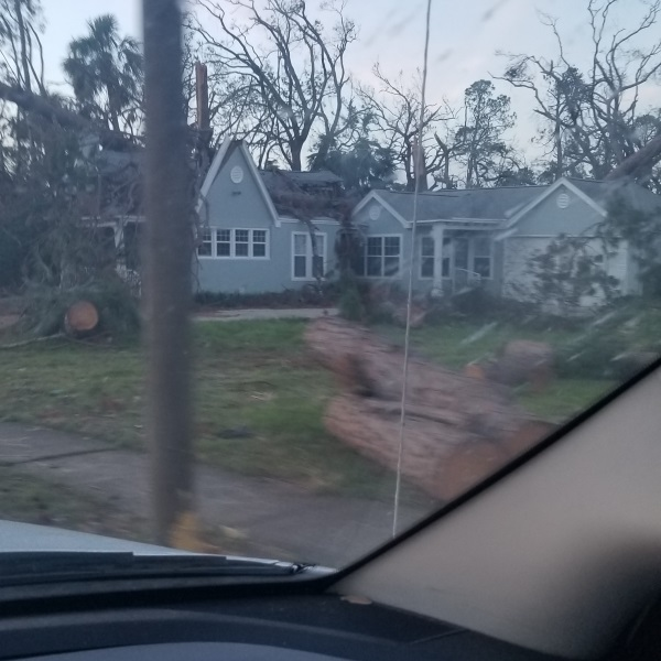 Tree Damage from Hurricane Michael - OneRestore