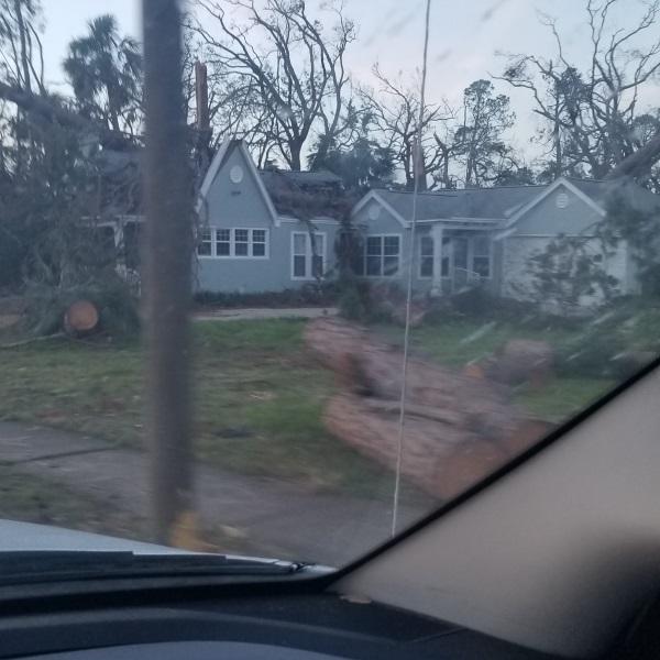 Tree Damage from Hurricane Michael - OneRestore